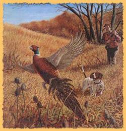 pheasant hunting