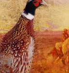 upland game bird hunting pheasant hunting